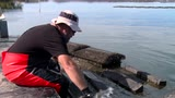 Thumbnail of Meet Shane Buckley - Wapengo Oysters