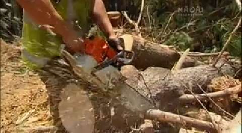 Video for Forestry initiative helps improve safety