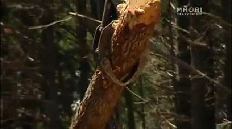 Video for Drastic safety improvements needed in Forestry