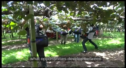 Video for Māori kiwifruit growers set up trade deals in Asia
