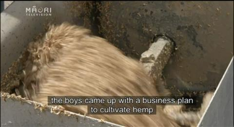 Video for Māori innovators use hemp as sustainable building material