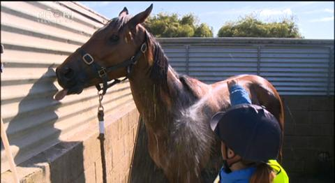 Video for One of few Māori jockey's rides to success