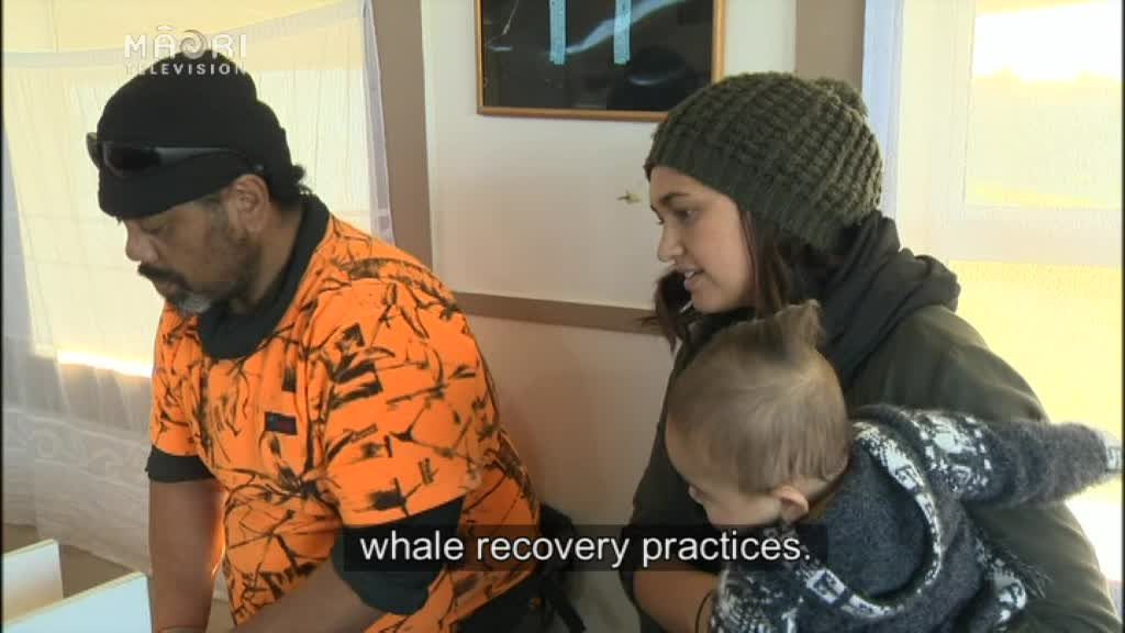 Video for Exclusive - Iwi leads International Whale Project