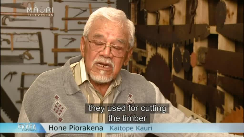 Video for Museum dedicated to Kauri opens in the Far North