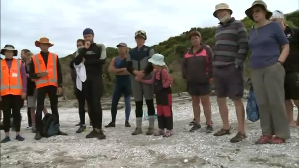 Video for Around 400 pilot whales stranded at Golden Bay
