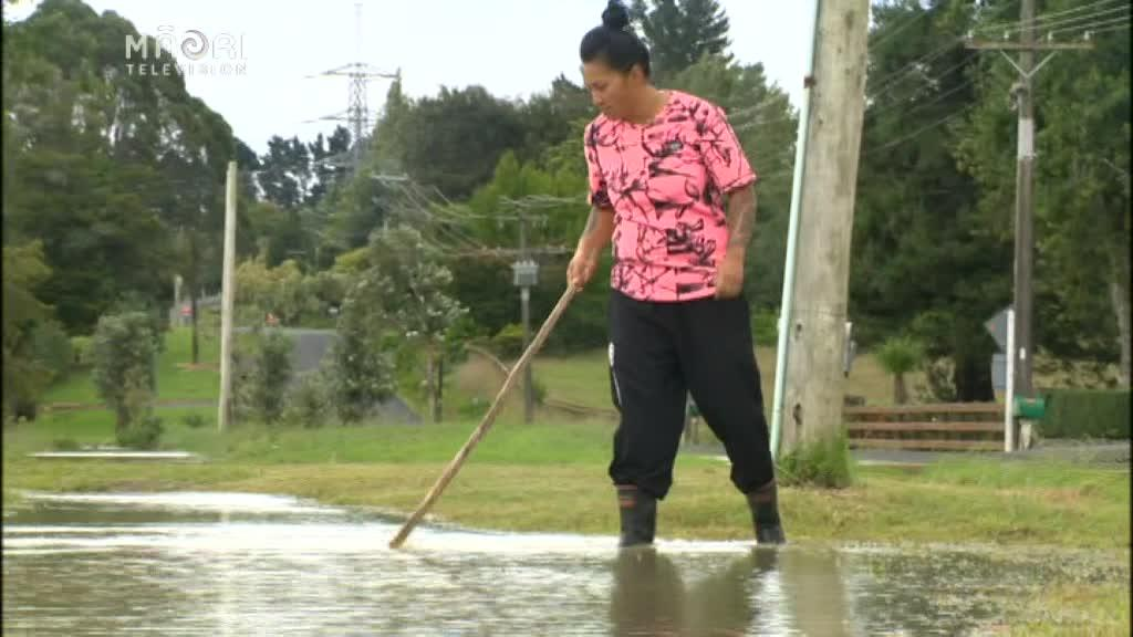 Video for Auckland resident hunts eels during floods