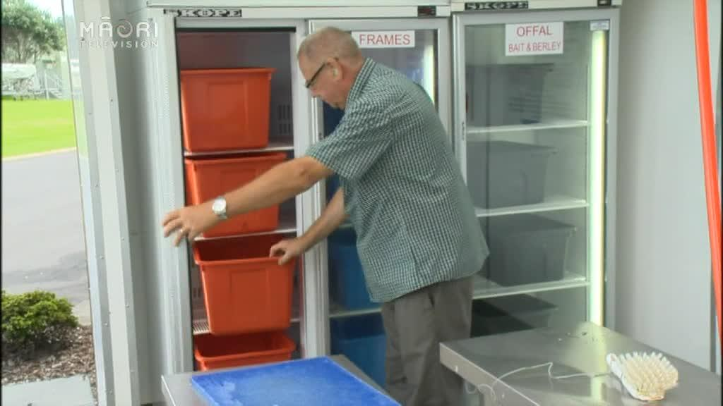 Video for Marae feeds needy with free fish off-cuts