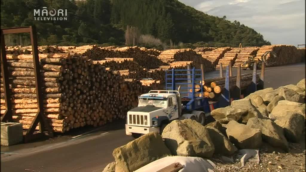 Video for Forestry boom to bring more jobs to Tairāwhiti