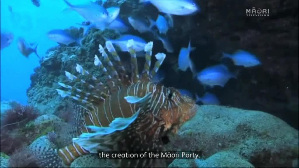 Video for Political leaders welcome inquiry into Marine and Coastal Act