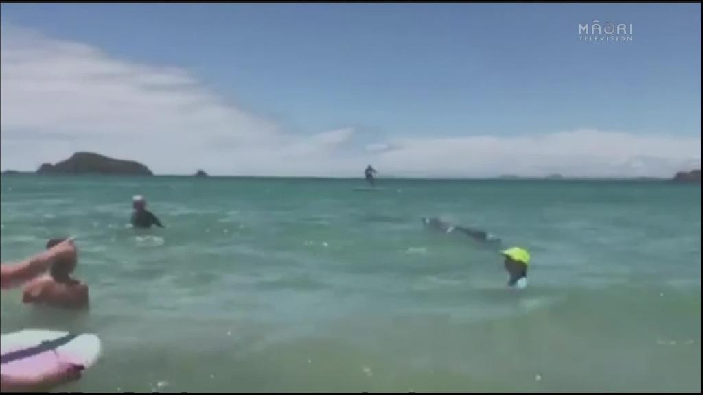 Video for Eight bottlenose dolphins visit the shores of Matauri Bay