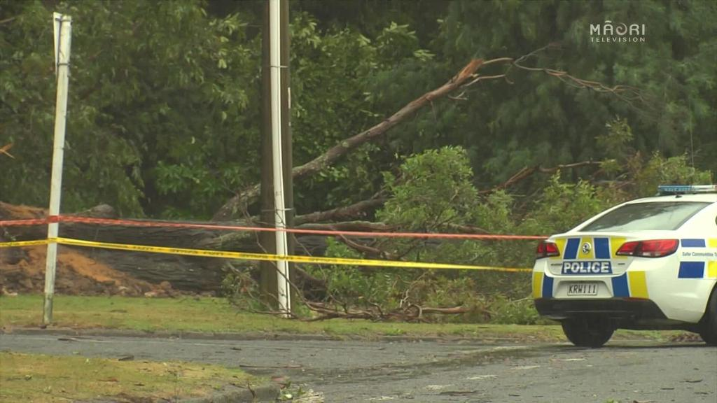 Video for Rotorua woman killed as tree falls on car