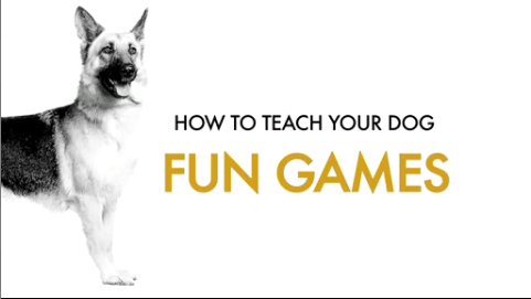 How to teach your dog fun games