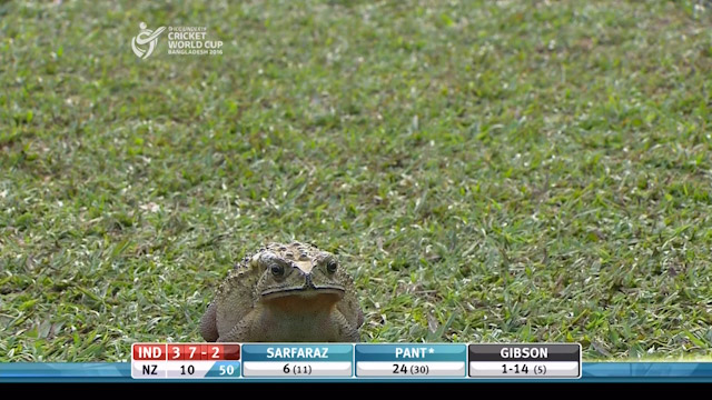 Unexpected Visitor at India v New Zealand – IND v NZ