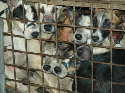 Philippine Dog Meat