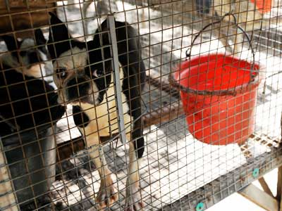 Tennessee Puppy Mill Rescue