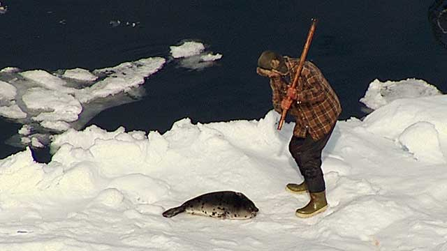 Seal Hunt Footage, Day 2
