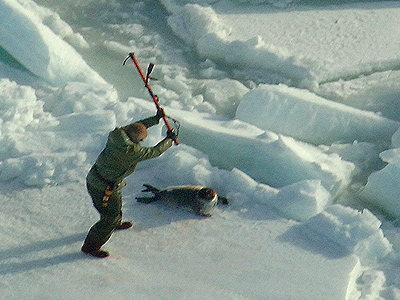 Seal Hunt Day 3 Broll