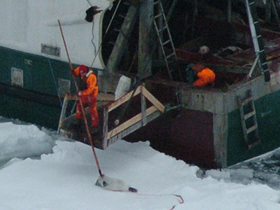 Graphic Cruelty of Seal Hunt