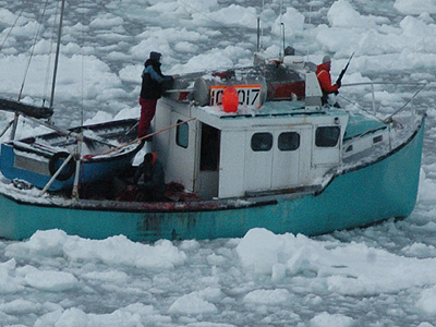 Graphic Seal Hunt Video