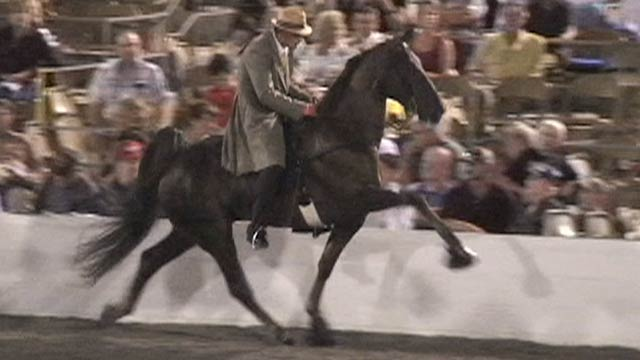 Tennessee Walking Horse Cruelty B-roll