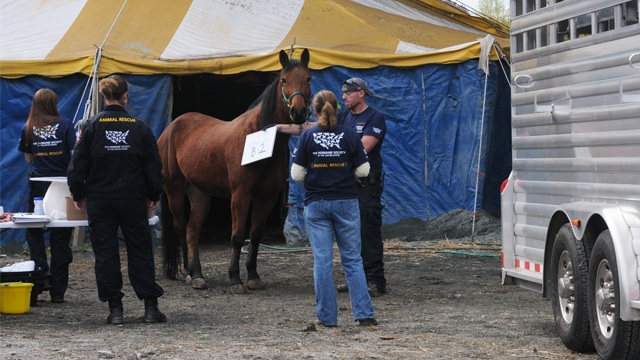 Baltimore Horses Rescued from Poor Conditions B-roll