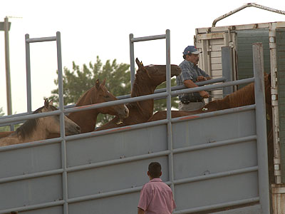Loading Horses B-roll