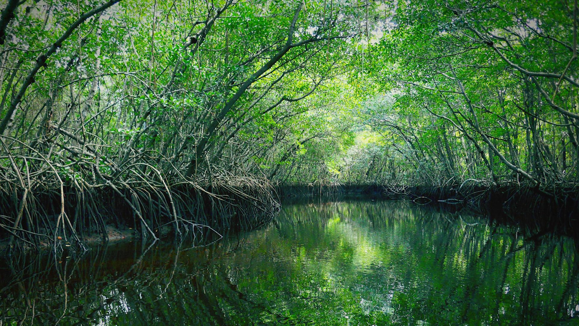 Florida has bought 20,000 acres to protect the Everglades