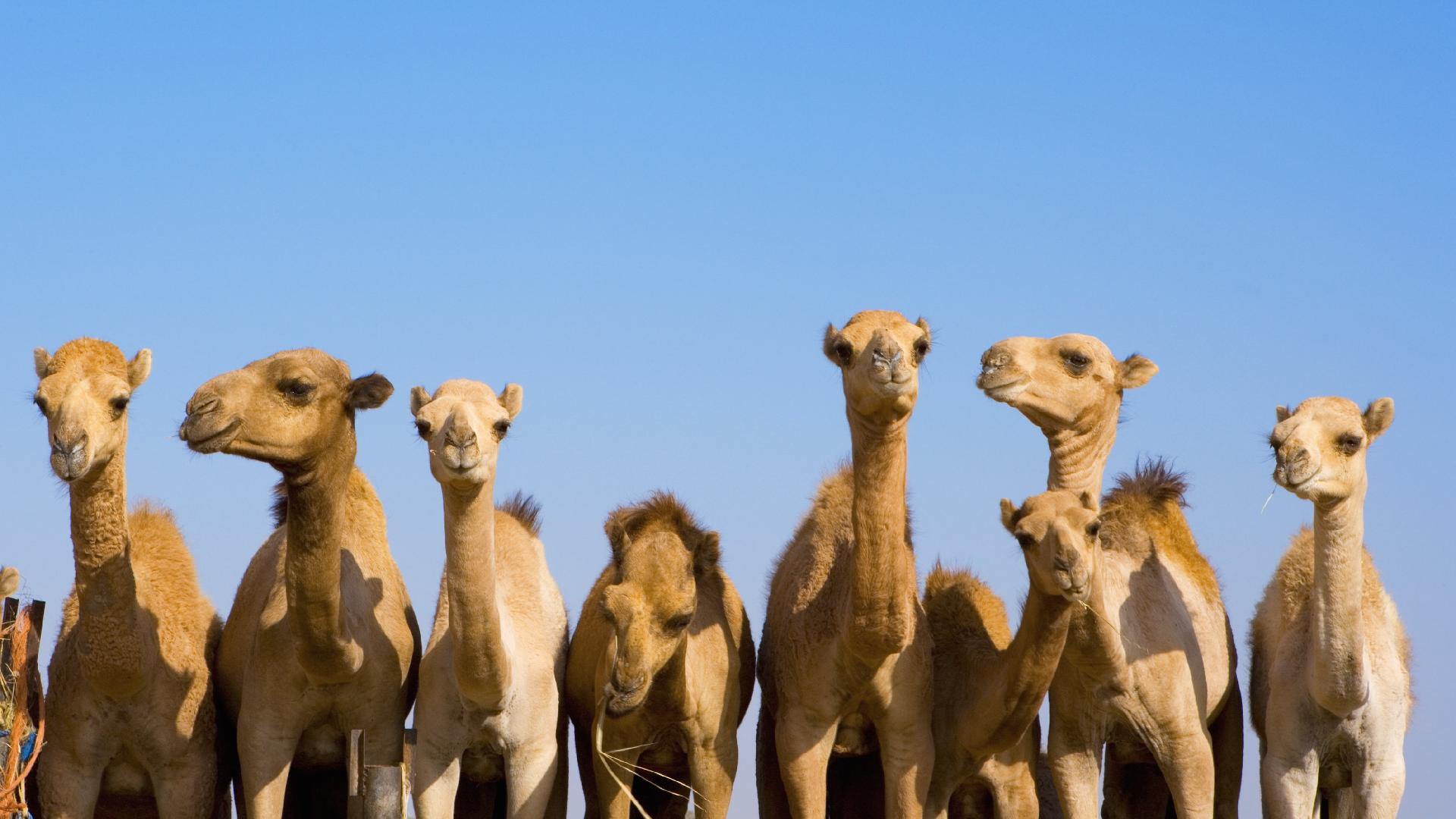 8 best reasons to visit Sharjah in the UAE - Lonely Planet