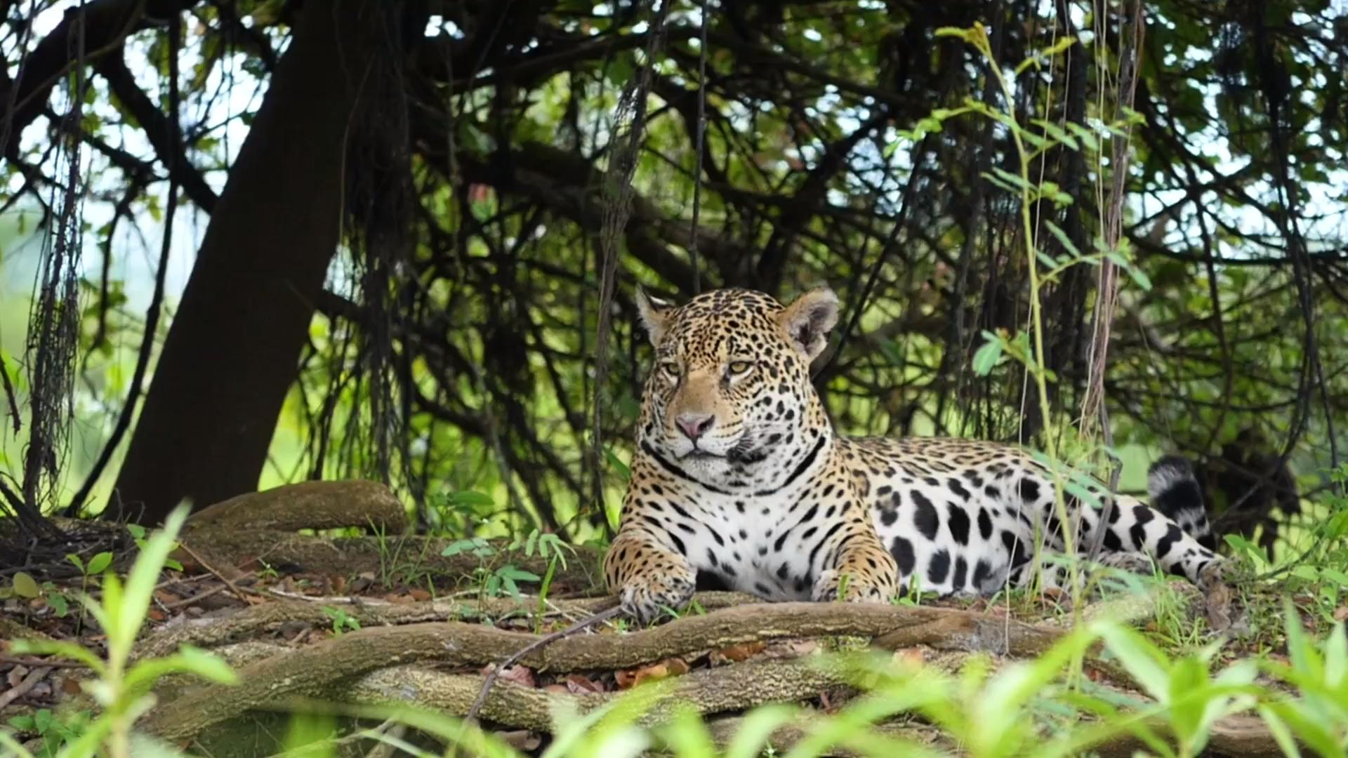 Wildlife wonderland: planning your trip to the Pantanal