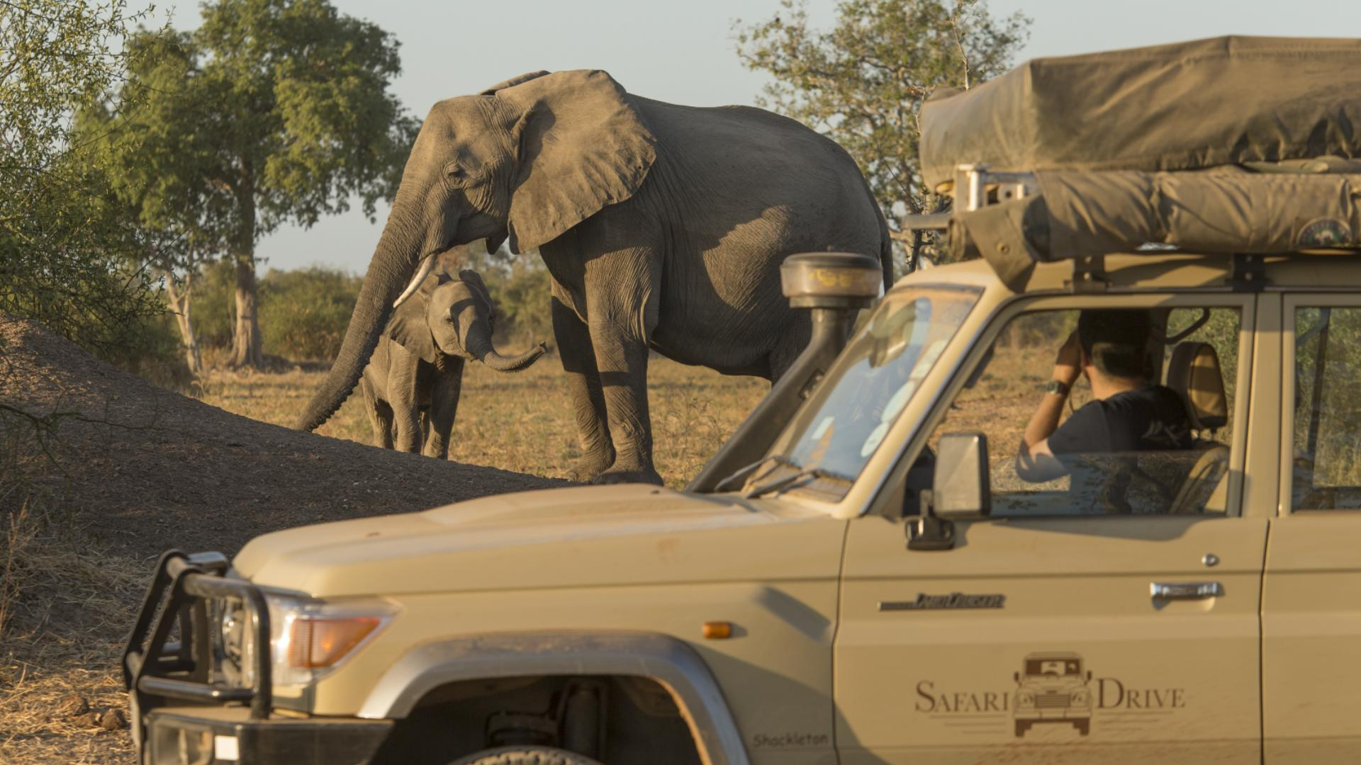 Safari animals: the story of leopards (and the best places to see them)