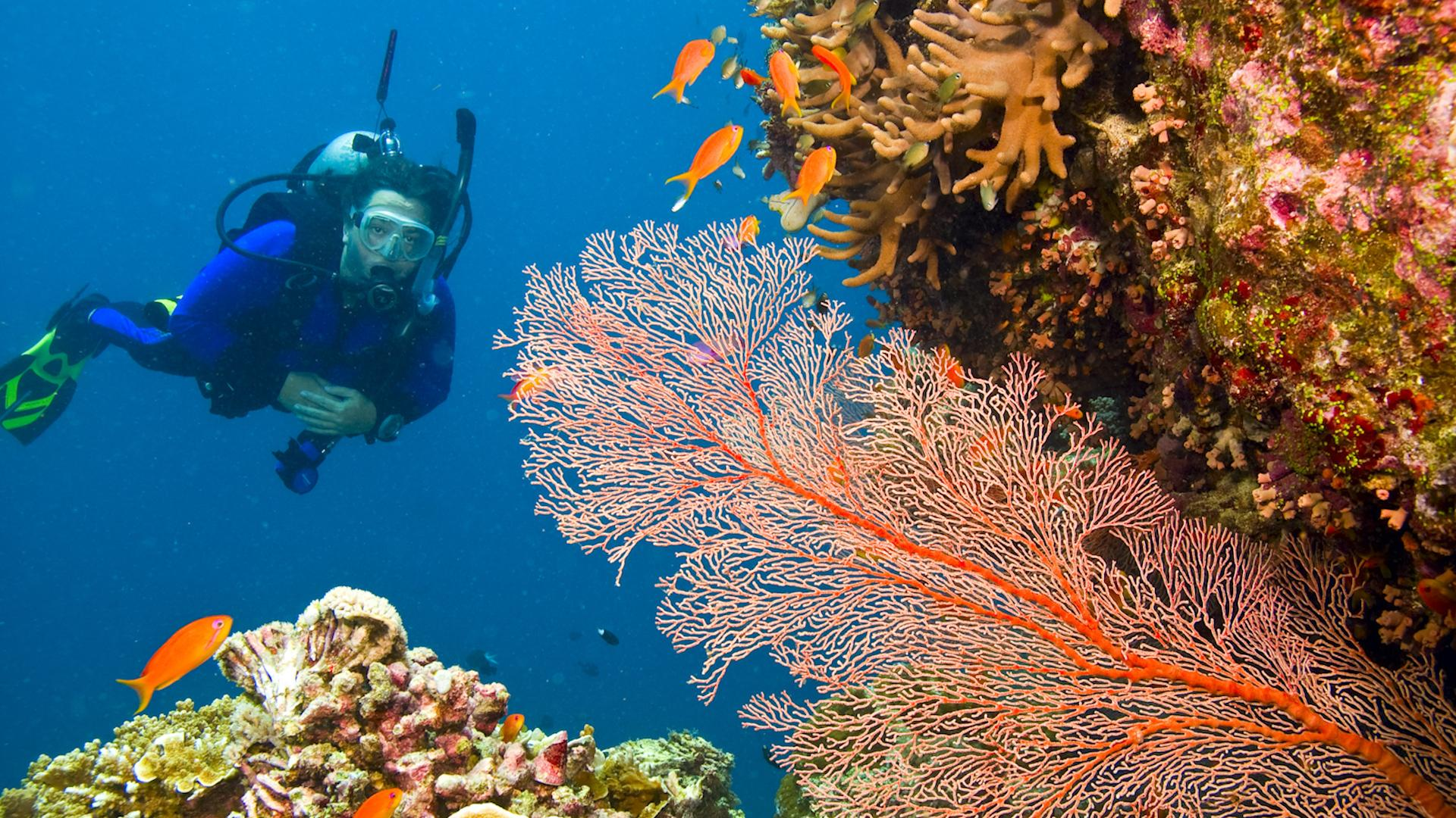 How to have a sustainable visit to the Great Barrier Reef